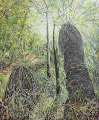 Grass Trees, Moggill Conservation Park. 2012. 101cm x 101cm. Oil on canvas. SOLD.