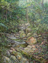 11:30am April, Little Nerang Creek, Springbrook National Park. 2017. 66cm x 51cm. Oil on canvas. SOLD.